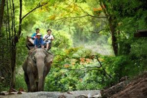 Mae Rim Attraction - Mae Sa Elephant Camp