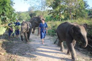 Mae Rim Attraction - Maerim Elephant Sanctuary