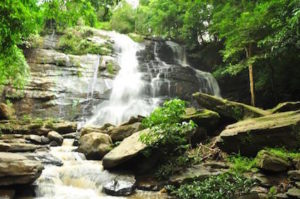 Mae Rim Attraction - Tard Mork Waterfall