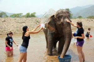 Mae Taeng Attraction - Elephant Nature Park