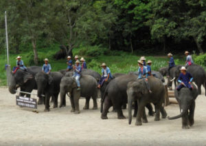 Mae Taeng Attraction - Maetaeng Elephant Park & Clinic